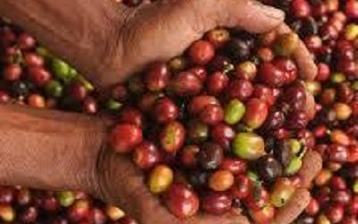 INDONESIA EXPECTS COFFEE EXPORTS TO REACH US$1.4 BILLION