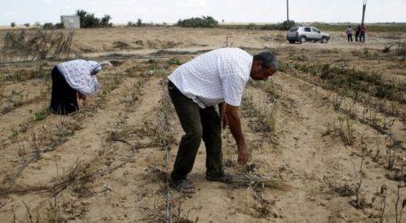 Gaza Agriculture Suffers Losses Due to Israeli Aggression