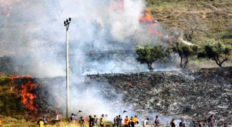 ZIONIST SETTTLERS BURN 100 OLIVE TREES NEAR NABLUS, OCCUPIED WEST BANK