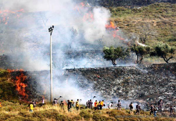 palestinian-olive-farm-burning-burin-village-near-nablus-yitzhar-settlement