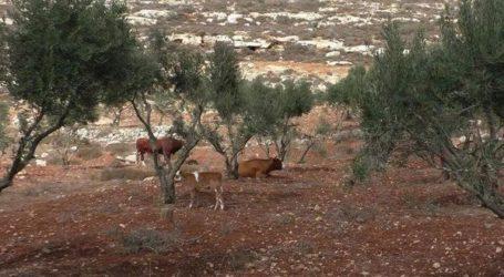 ISRAELI TO CONFISCATE OVER 300 DUNAMS OF LAND NEAR RAMALLAH