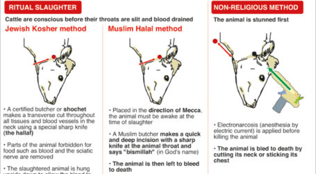 THE PERCEPTION PROBLEM OF HALAL FOOD INDUSTRY