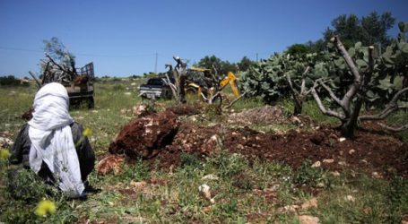 ISRAEL TO UPROOT 2000 TREES IN NORTHERN SALFIT