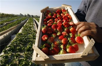 GAZA VEGETABLES TO BE SHIPPED TO ISRAEL FOR FIRST TIME IN 8 YEARS