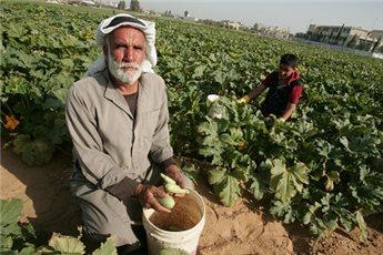 GAZA VEGETABLES ENTER ISRAEL FOR 1ST TIME SINCE 2007