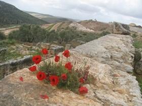 ISRAELI SETTLERS TAKE OVER ARCHEOLOGICAL SITE IN SALFIT