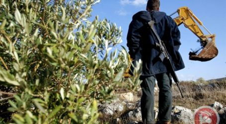 ISRAEL NOTIFIES SALFIT FARMERS OF PLANS TO REMOVE 140 OLIVE TREES