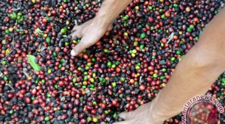 LAMPUNG EXPORTS OF INSTANT COFFEE GROWING