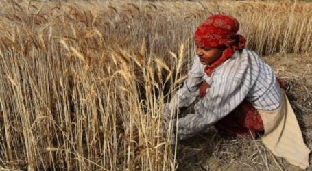Climate Change Poised To Hurt Food Supplies: Study
