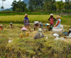 Indonesian VP Says Agriculture Becomes Backbone of Economy during Pandemic