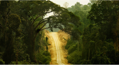 93 Experts to Attend Asia Pacific Rainforest Summit in Yogyakarta