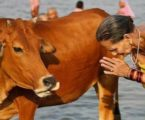 India: Muslim Man Lynched on Suspicion of Cow Smuggling