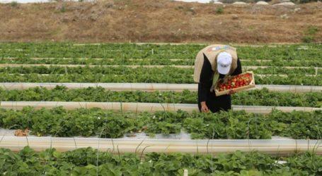 UNRWA Report: Gaza Suffers Humanitarian Crisis
