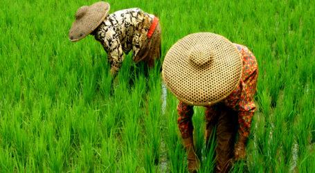 "Indonesian Farmer Receives FAO ""Model Farmers"" Awards"