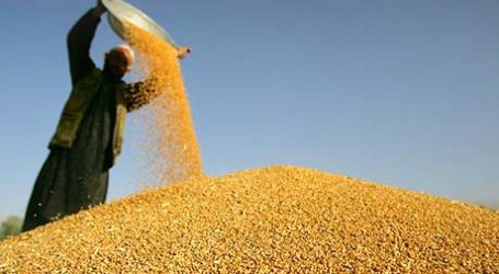 Indonesia Set to Become World's Biggest Wheat Importer