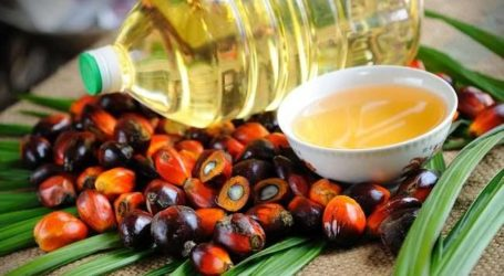 Indonesia: Palm Produces More Vegetable Oil Than Others