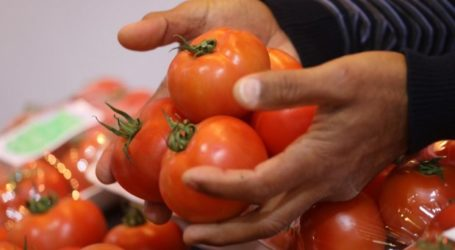 Gaza Launches Drive for Safe Agricultural Products