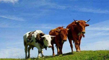 Muslims Can Purchase Animal Sacrifice on Eid al-Adha Digitally