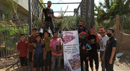 Exceeding the Target, Olive Waqf for Gaza Residents Reaches 2,500 trees