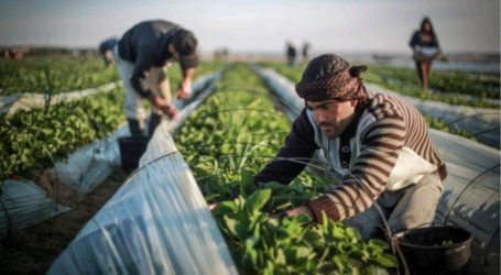 Palestinian Ministry of Agriculture: Food Basket in Gaza Approaches Edge of Danger