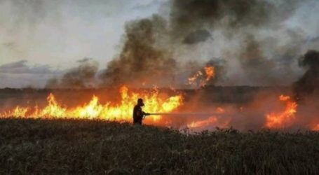 Palestinians Youth Fire Incendiary Balloons Spark Several Blazes in Israel