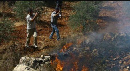 Israeli Settlers Set Olive Trees on Fire Near Salfit